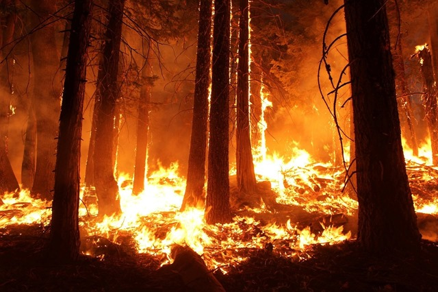 wildfire-1105209_1280